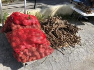 Roots and Tubers Program